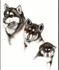 Sale Dog Breed Note Cards By Laura Rodgers